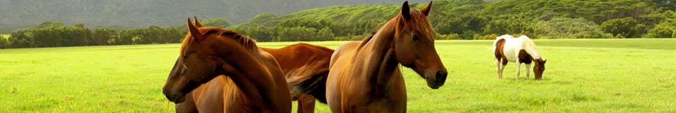 Horse Properties International - Privacy